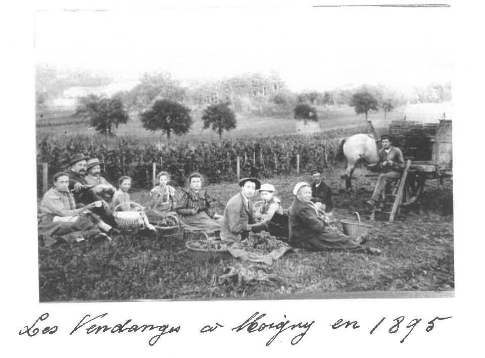 CP-Vendanges-en-1895