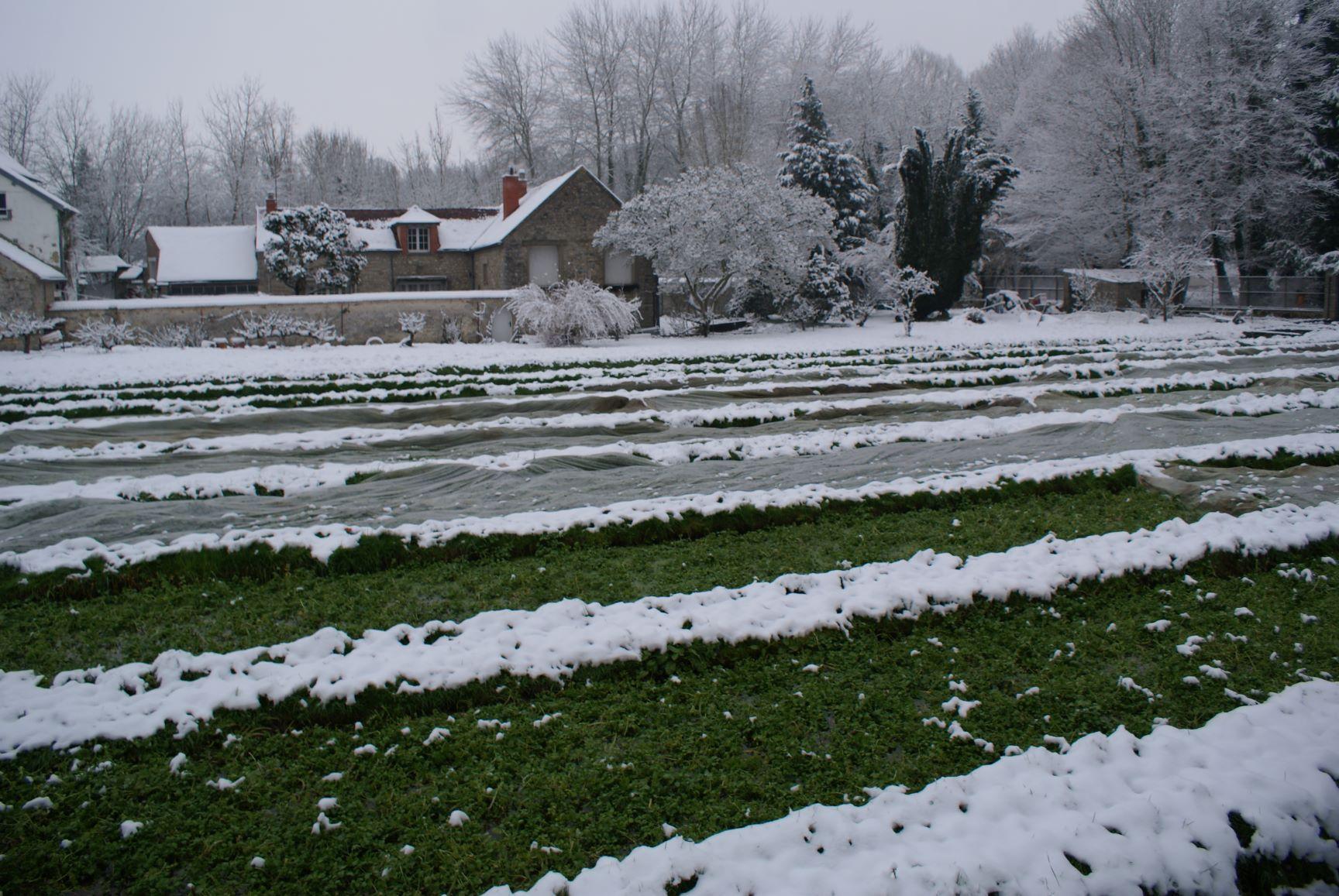 Cressonniere-sous-la-neige-DSC01853
