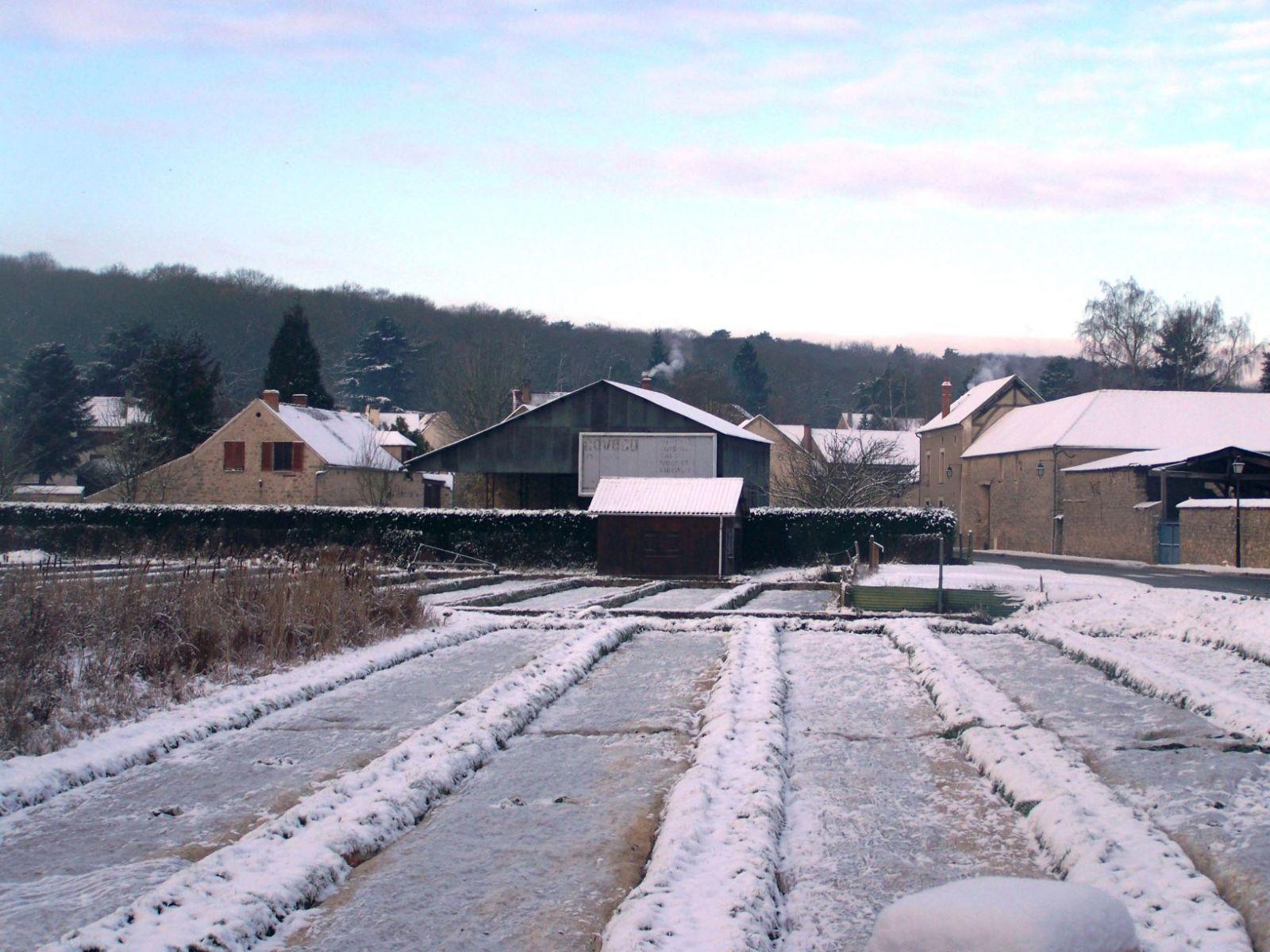 Cressonniere-sous-la-neige